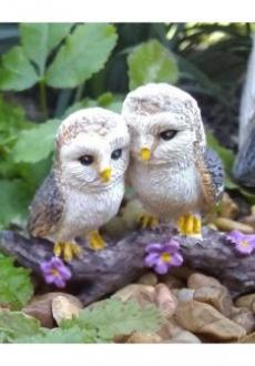 Cozy Owls