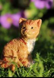 Buttercup the Kitten